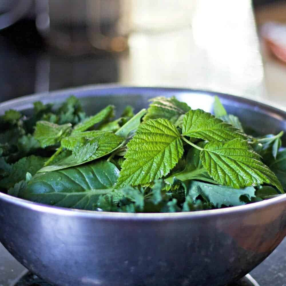 Greens for juicing. Including Stinging nettles