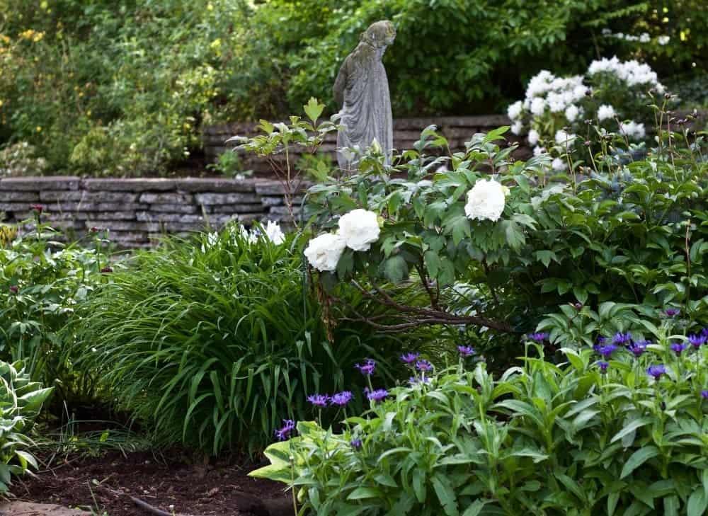 Spring Flowering Bushes You'll Love