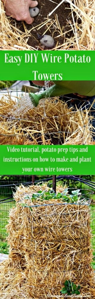 Easy DIY Wire Potato Towers are easy to make, and easy to harvest! They are fantastic garden space savers!