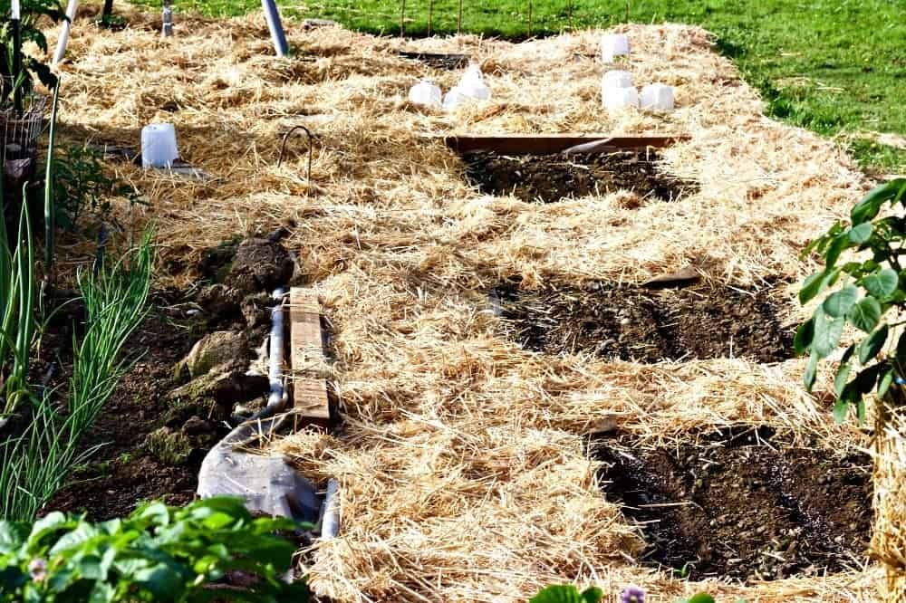 Lasagna Gardening Method: Save Garden labor and water while improving the soil! http://HomemadeFoodJunkie.com