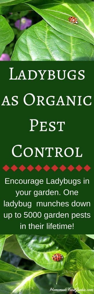 Ladybugs as Organic Pest Control