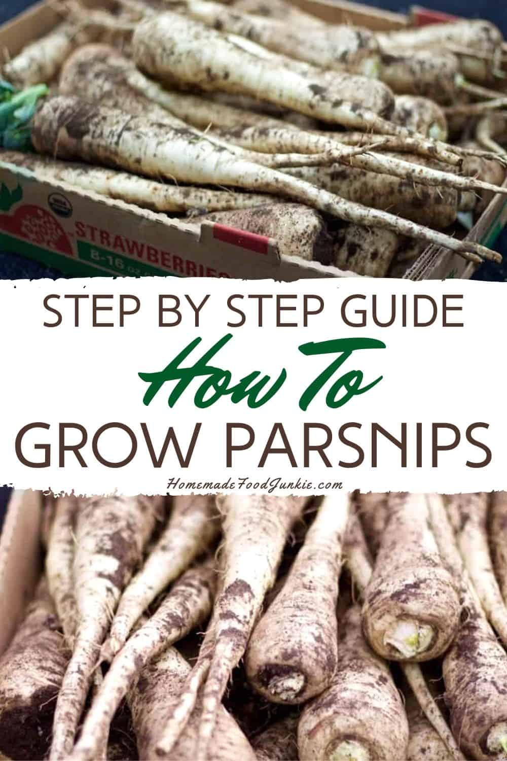 step by step guide how to grow parsnips-pin image