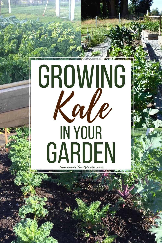 Growing kale in your garden-pin image