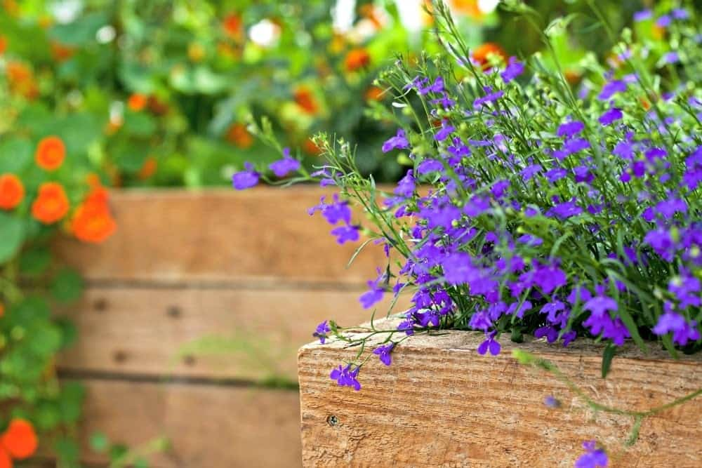 five tips for Pollinator Garden Success