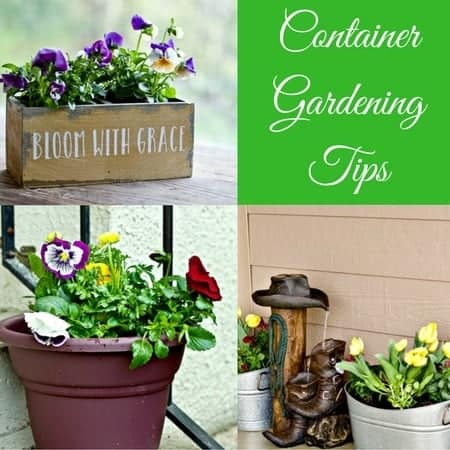 Container Gardening Tips | Homemade Food Junkie