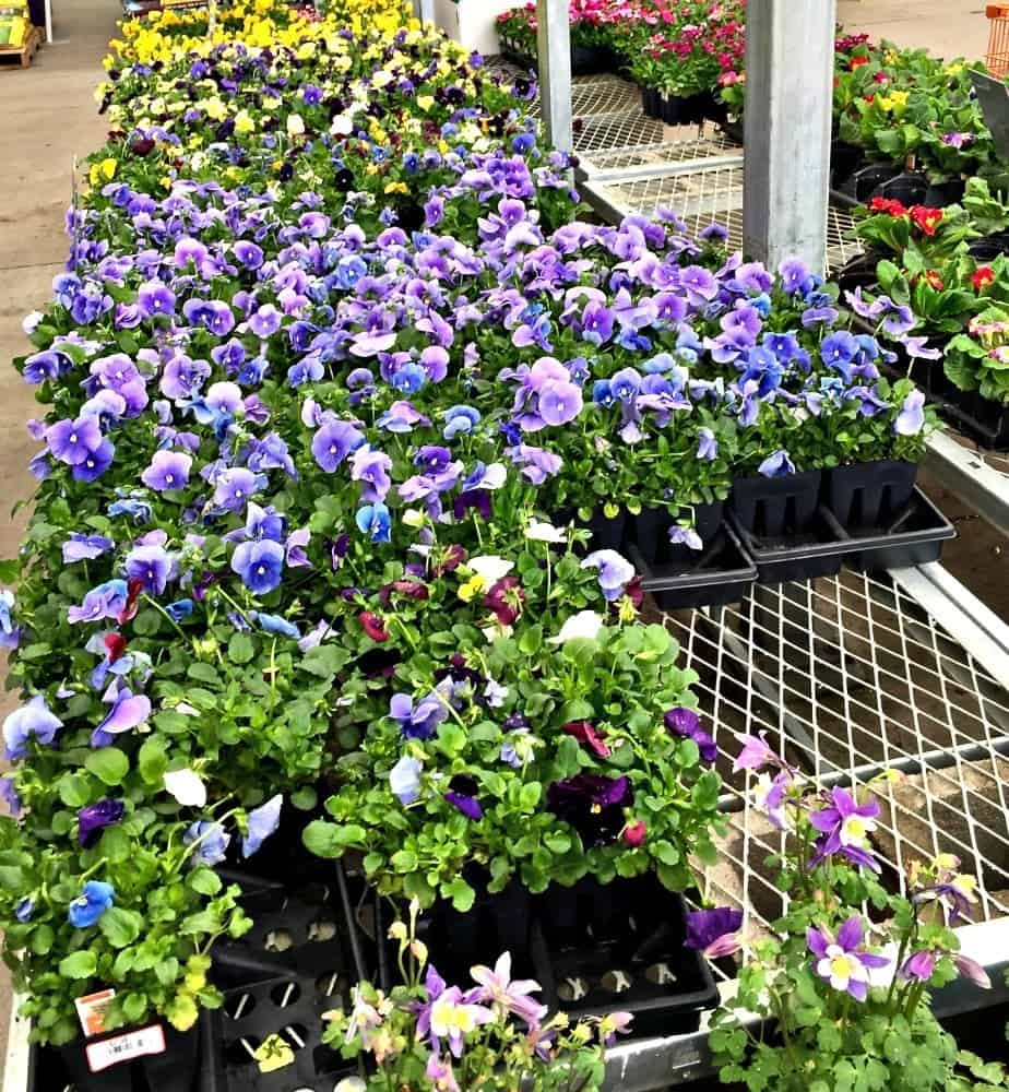 Annuals for Container Gardening