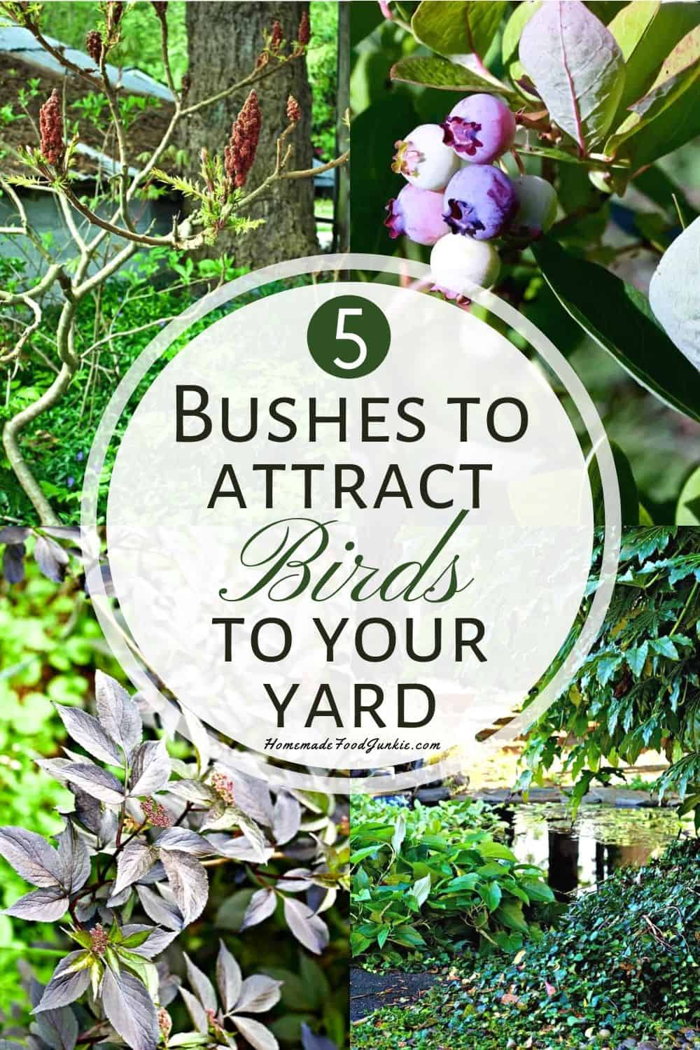 5 bushes to attract birds to your yard-pin image