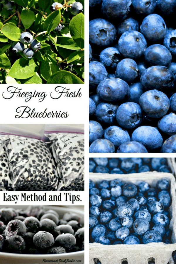 Freezing Blueberries Easily. Freeze Blueberries Easily With This Simple Method. Properly Frozen Blueberries Will And Retain Their Nutrients And Make You Yummy Blueberry Recipes All Year Long. #Blueberries #Foodpreservation #Freezing #Freezingmethod #Harvesttips #Garden #Gardening