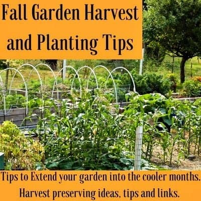 Fall garden harvest and planting tips homemade food junkie for Fall cooking tips