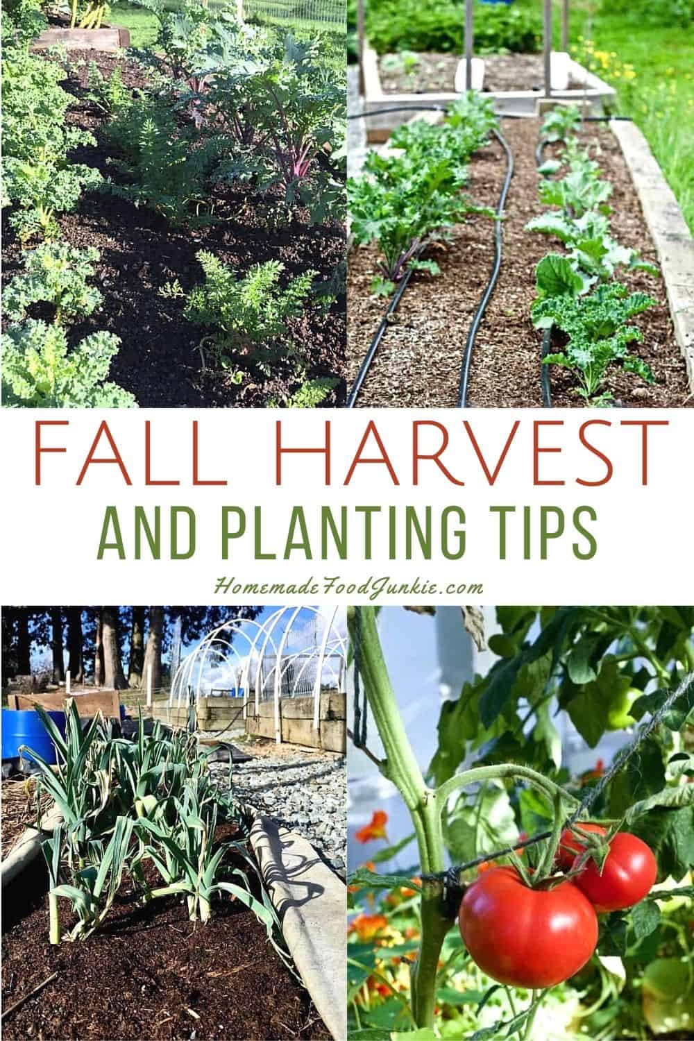 Fall harvest and planting tips-pin image
