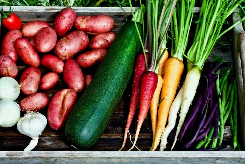 9 tips for gardening success. Harvested zucchini, rainbow carrots, purple and green beans, red potatoes, onion and garlic.