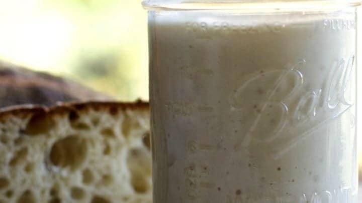 Sourdough starter with Wild Yeast