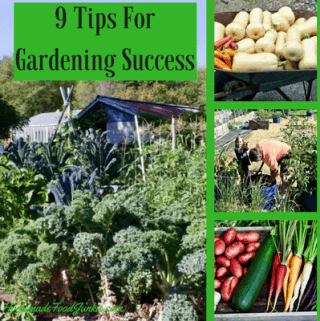 9 Tips For Gardening Success