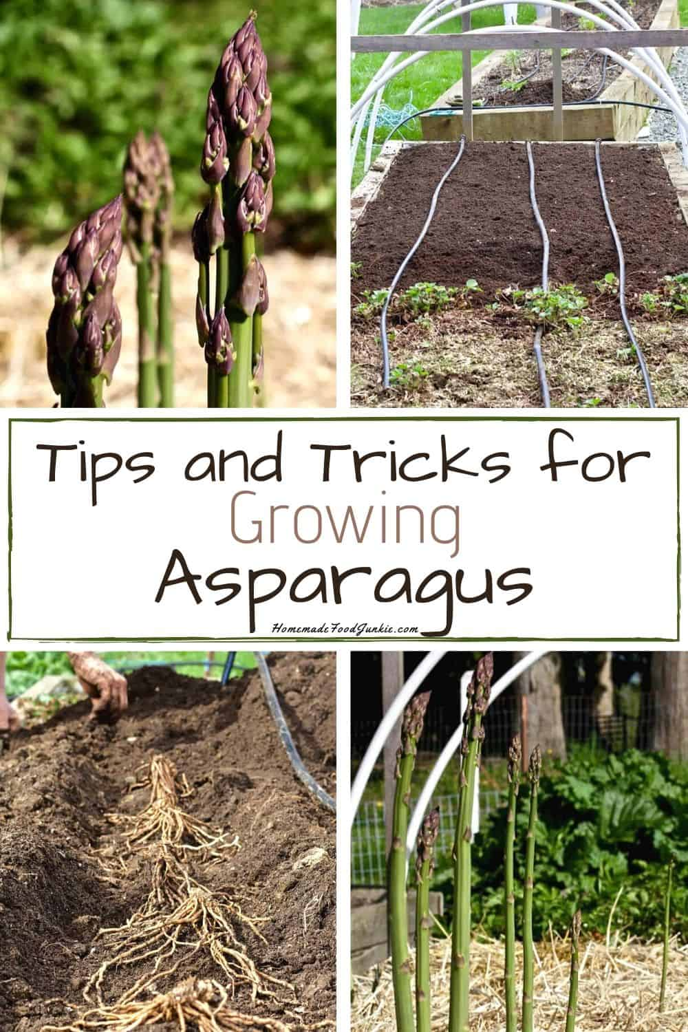 Tips and tricks for growing asparagus-pin image