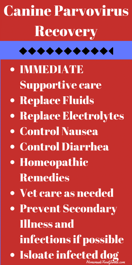 Canine Parvo Recovery supports #canineparvorecovery #parvo #canineparvo #parvovirus #parvohometreatmentplan #iparvoinformation https://www.homemadefoodjunkie.com/canine-parvo-recovery/