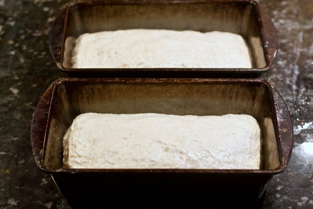 sourdough rising in two bread pans