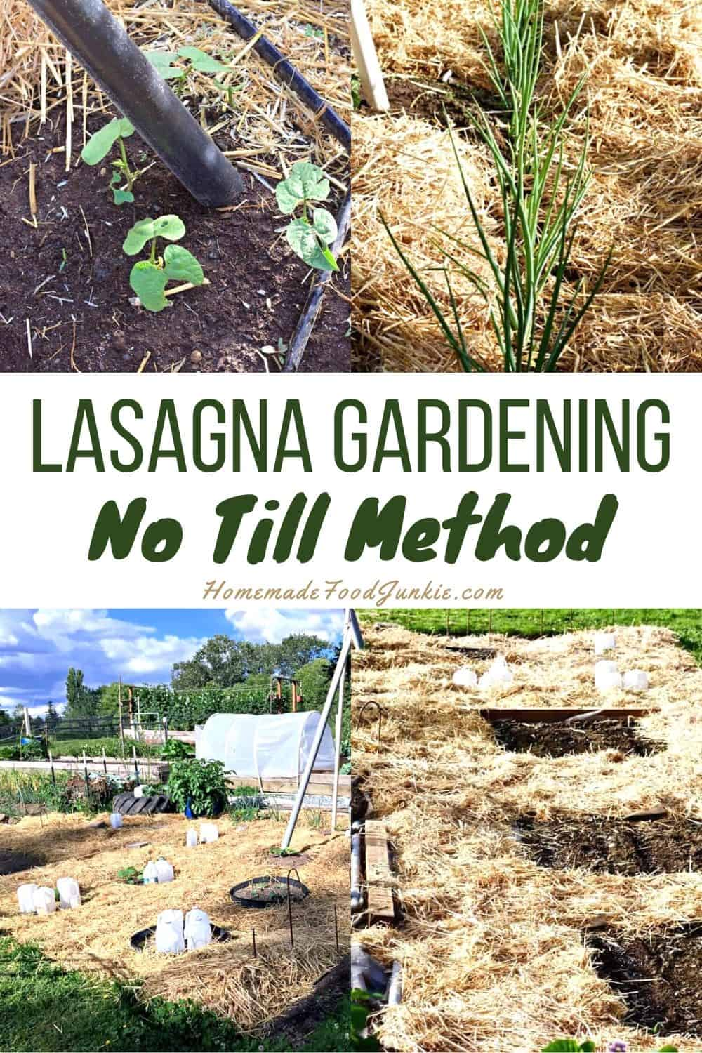 Lasagna gardening no till method-pin image