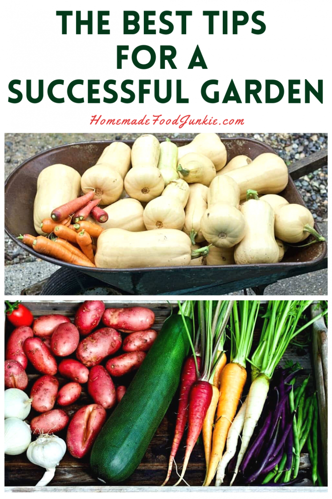 The best tips for a successful garden-pin image