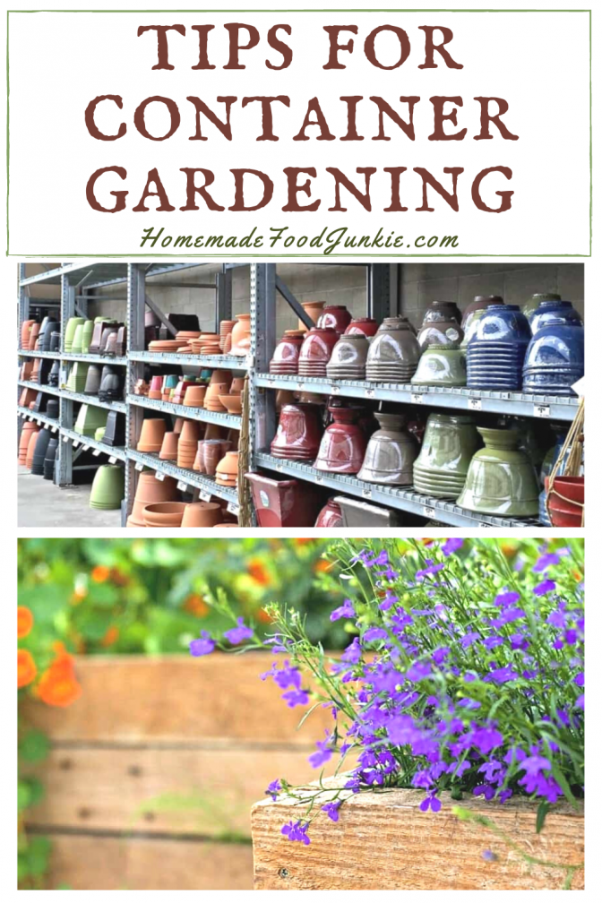 Tips for container gardening-pin image