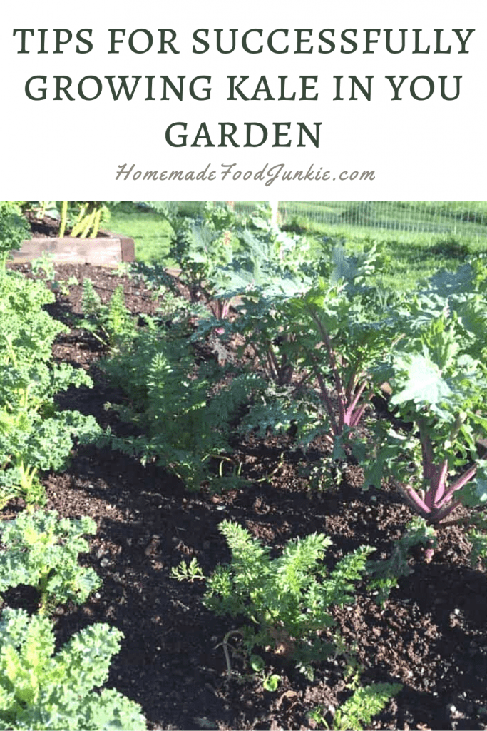 Tips for successfully growing kale in your garden-pin image