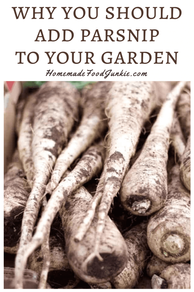 Why you should add parsnip to your garden-pin image