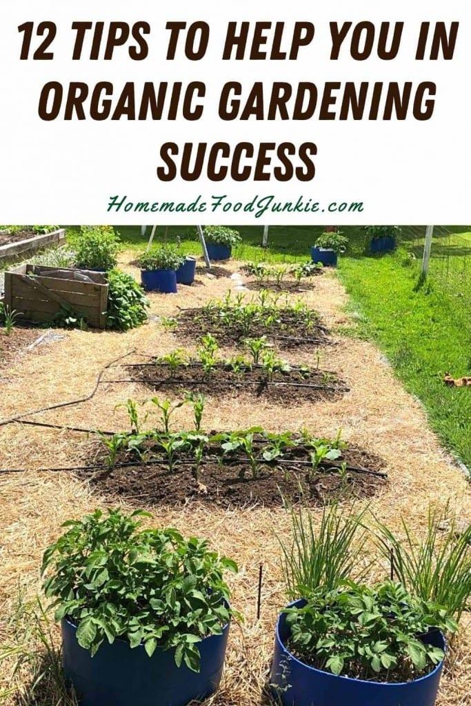 12 tips to help you in organic gardening success-pin image