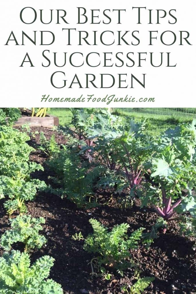 Our Best Tips And Tricks For A Successful Garden-Pin Image