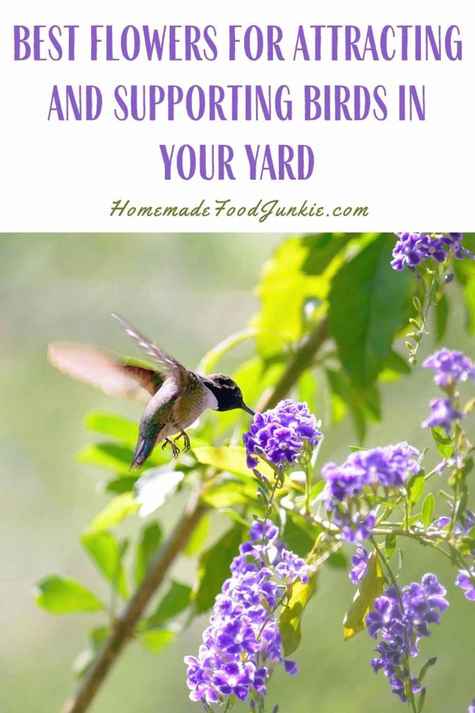 Best Flowers For Attracting And Supporting Birds In Your Yard-Pin Image