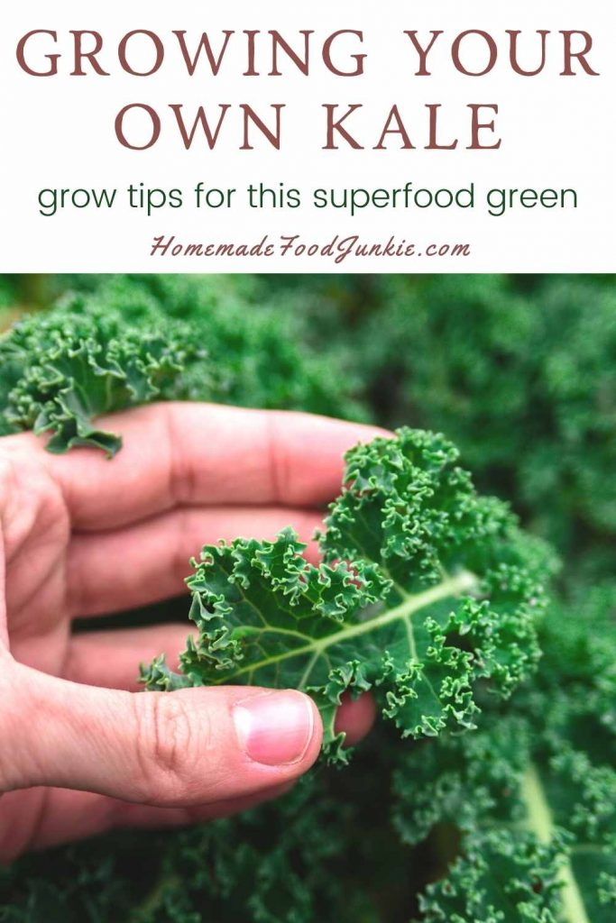 Growing Your Own Kale-Pin Image